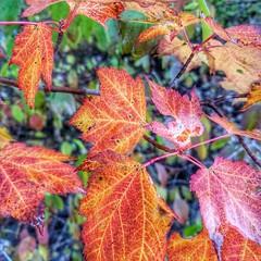Deep Creek Lake. #autumnglory #westernmd