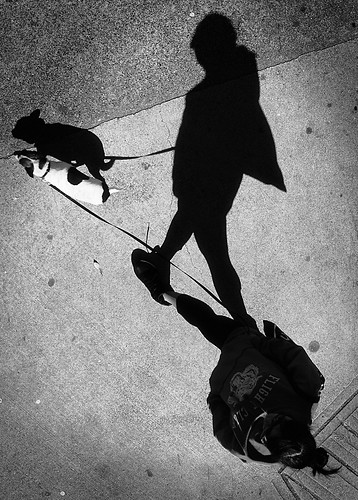 street light shadow urban bw dog view walk top candid sony waterfrontstation a55 kemily 2013syzy