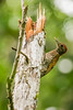 Foengoe Island, Central Suriname Nature Preserve, Suriname