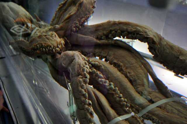 特別展「深海 —挑戦の歩みと驚異の生きものたち—」~ The deep ~_053