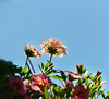 Summer Flowers and Blue Sky