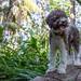 8/12: Lira - Welcome to the Jungle! by DebinSD