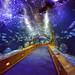 Glass tunnel in L'Oceanografic aquarium in Valencia, Spain