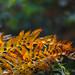 Fall in Ferns