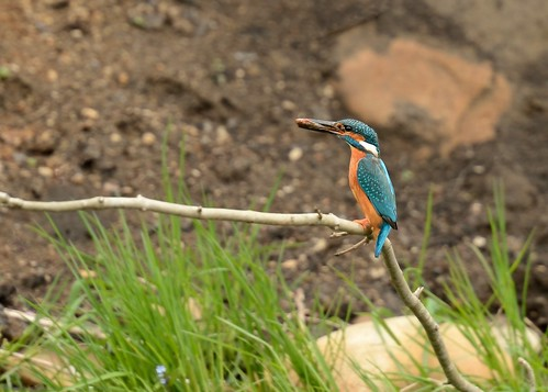 Kingy with fish by Andy Pritchard - Barrowford