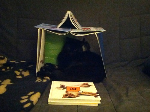 Black cat in a house built of books about cats!