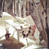 Alice in Wonderland. #holidays #seasons #windowshopping #5thave #weekend #playingtourist #nyc #faeries