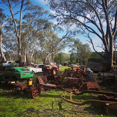 Australia even has free range cars...or us this Car Heaven?