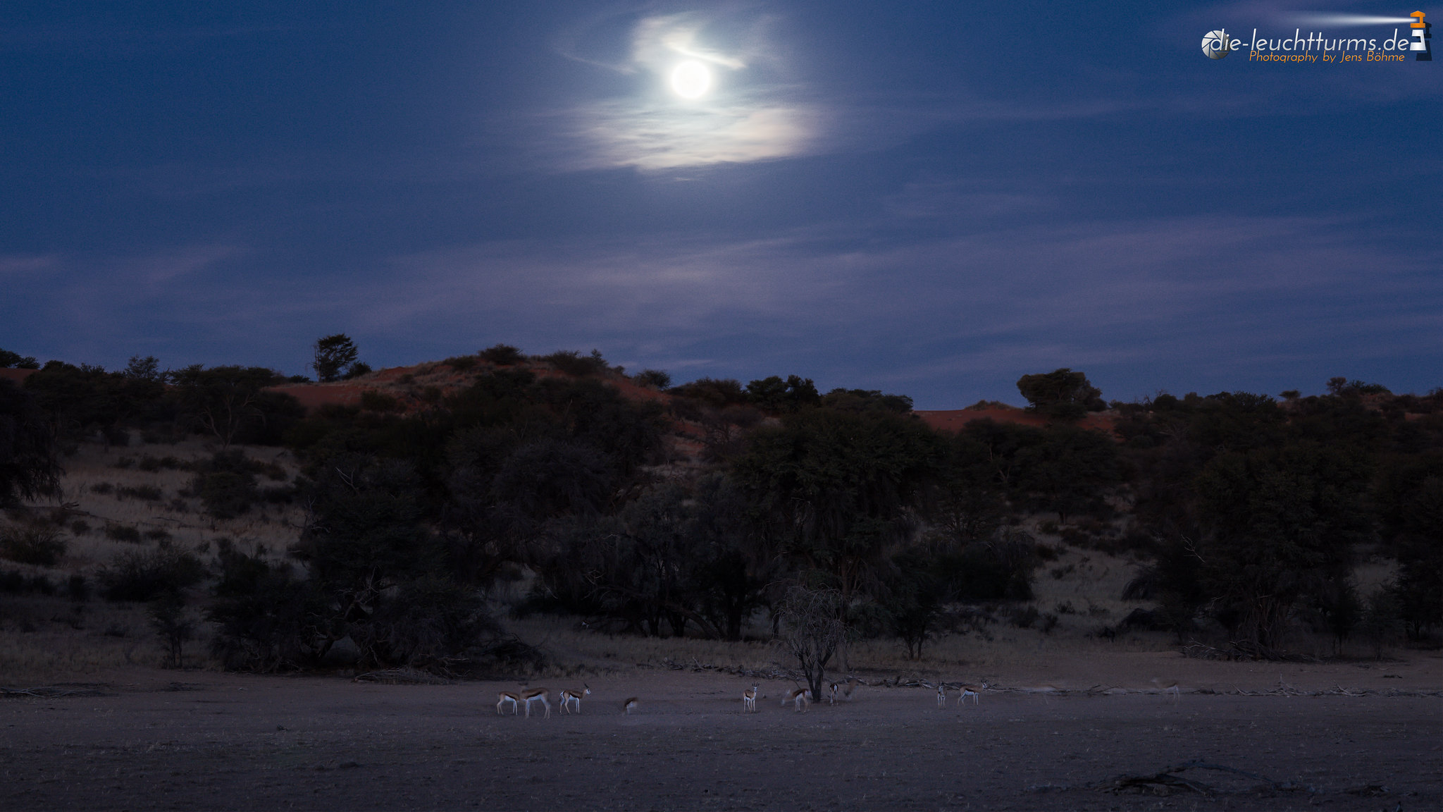 Springboks under Moonlight