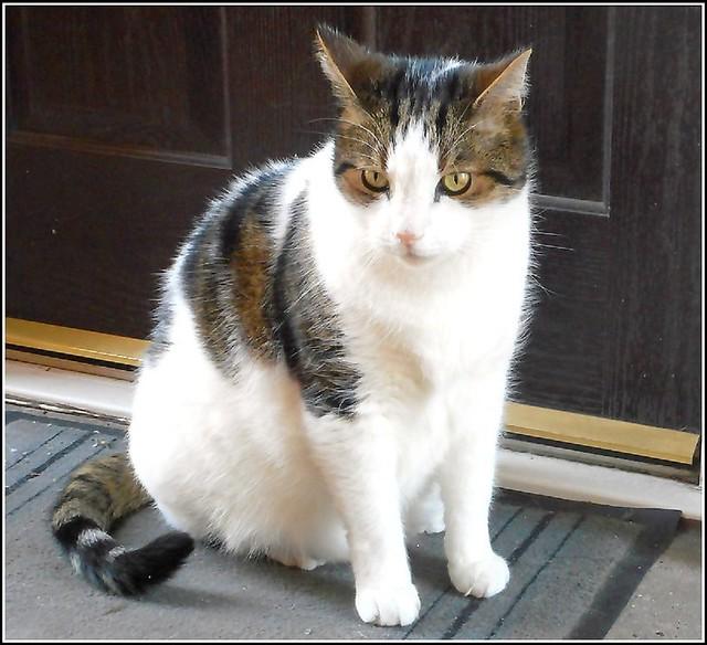 The Doorstep Cat ..