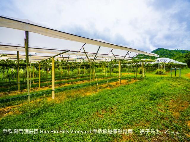 華欣 葡萄酒莊園 Hua Hin Hills Vineyard 華欣旅遊景點推薦 50