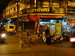 Thailand at night with dog - Chiang Mai