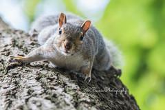 Campus Squirrels