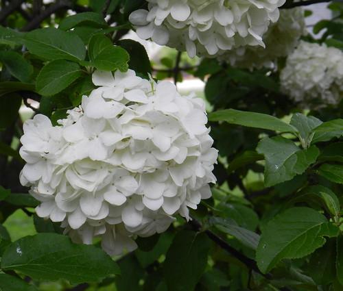 todayflowersDSCN6474