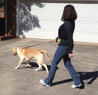 leash 3