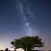 Tree of Life by Matteo Dunchi
