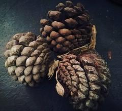Pine cones #cf16 #repeatingpatterns