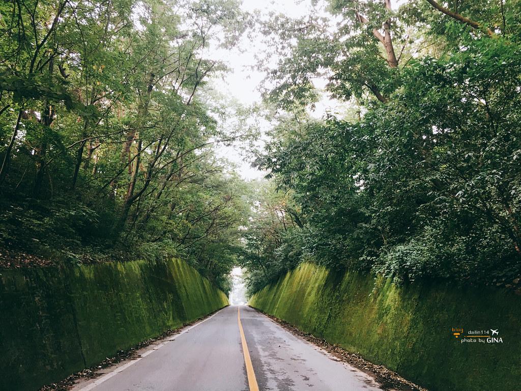 【忠清北道丹陽私房景點】苔蘚道路/苔蘚隧道|怎麼會這麼好拍!韓國人旅遊路線 (충청북도 단양 이끼터널) @GINA環球旅行生活|不會韓文也可以去韓國 🇹🇼