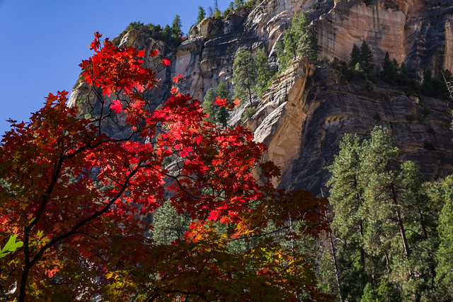 Trails: West Fork of Oak Creek Canyon No. 108