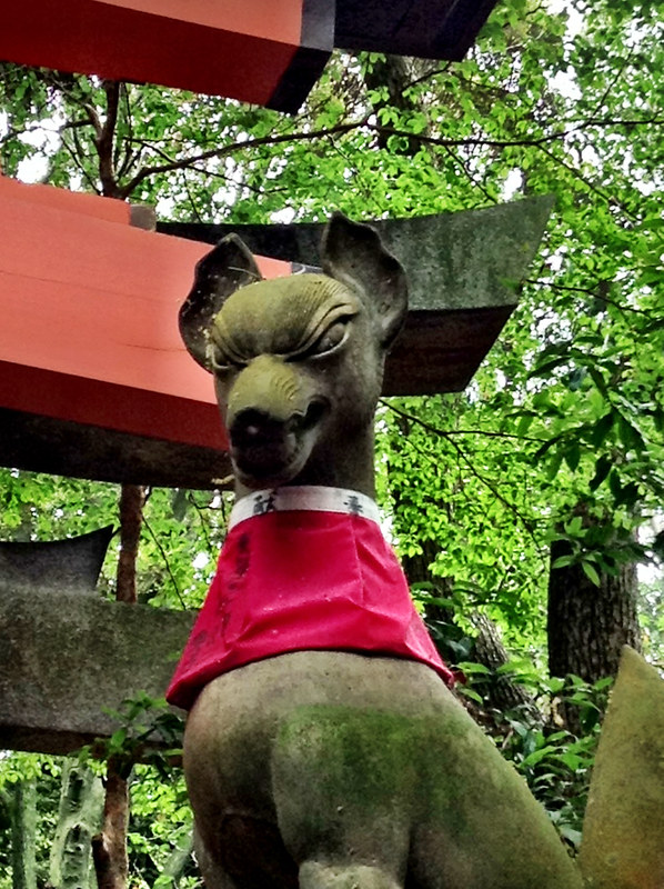 fox of fushimi inari shrine.