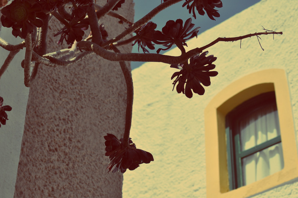 finestra e pianta grecia