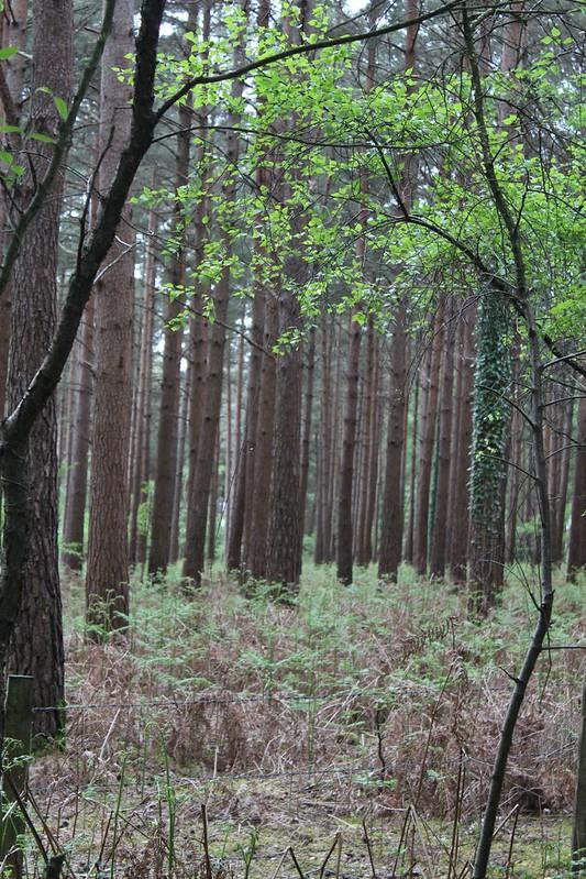 Roydon Woods10