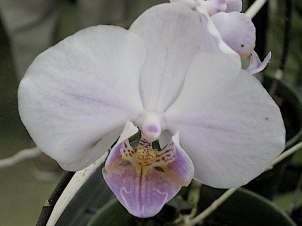 Orchids of Ecuador
