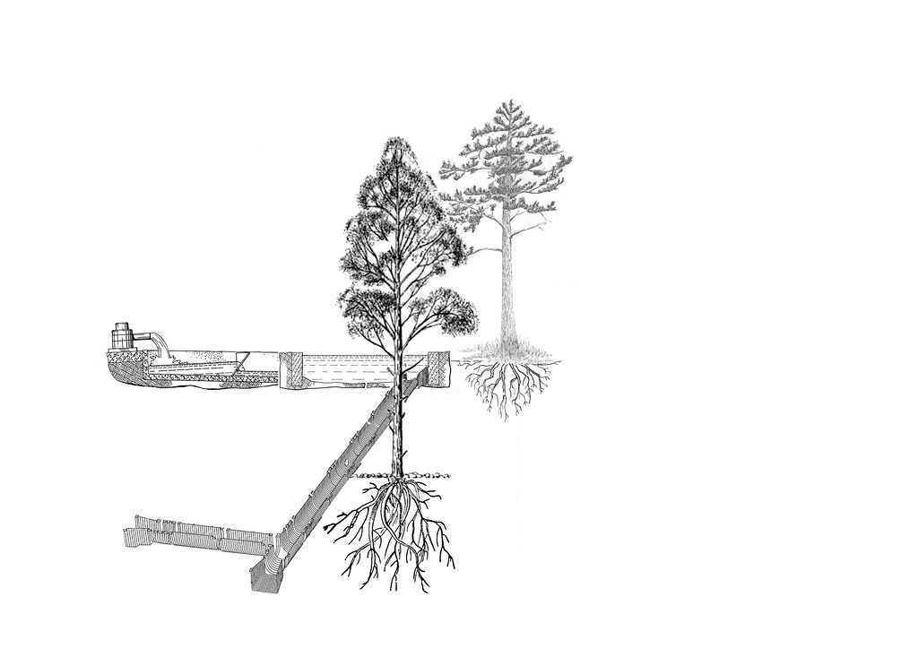 Trees - National Garden and Amalias Street