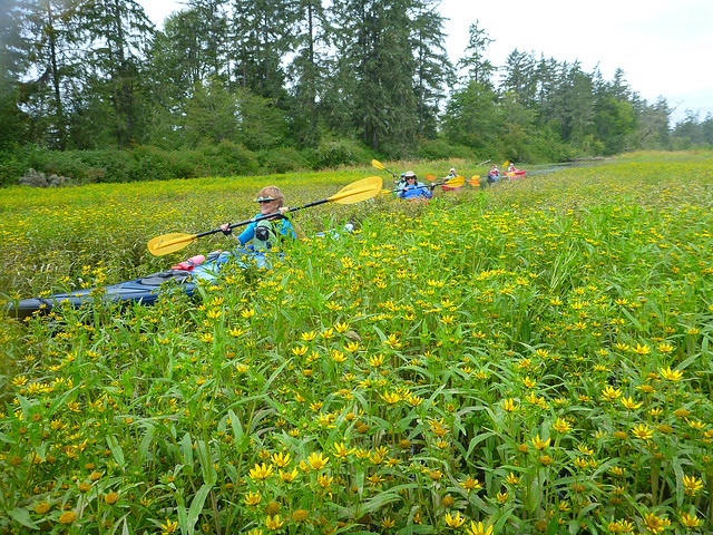 paddling through flowers