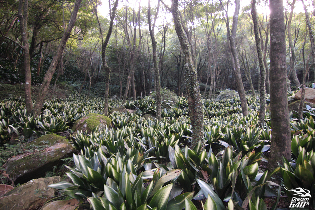 竹子湖青楓步道28