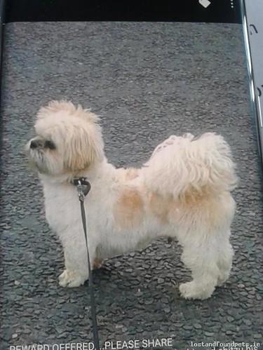 Sun, Aug 28th, 2016 Lost Male Dog - Barrack Street, Bailieborough, Cavan