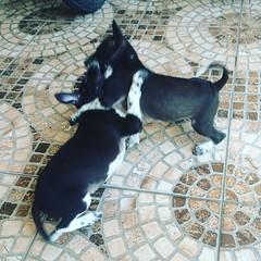 #KSB #HidupSoSexy #MekeberMelincer #WawaWewe #UpahHidup #DesaSangsit #DesaSuwug #JaanHidupDiBali #LoveFamily #LikeFatherLikeSon #Menggigit #KomangReni #TudeWira #GrismaWira #TrianaWira #RedKarma #Dog