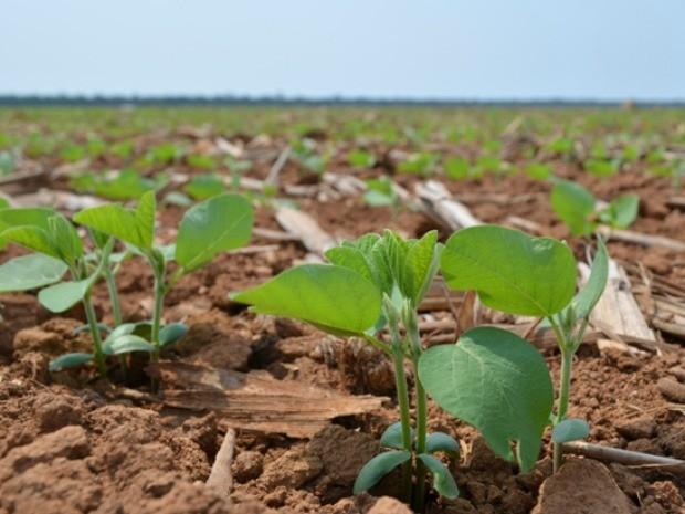 Cadastro anual de sojicultores no Pará encerra no final de março, plantação de soja