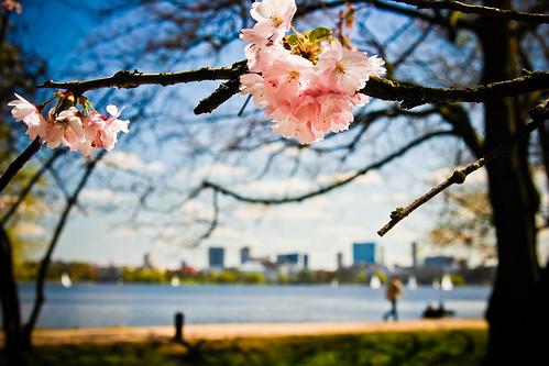 Frühling an der Alster #5384