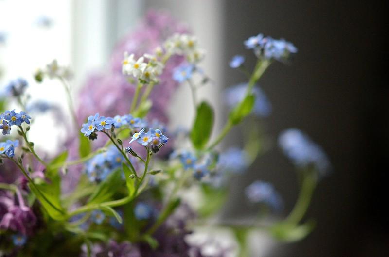 spring flowers_560