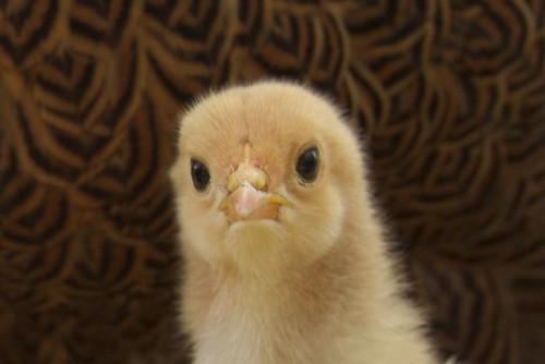 Chick 2013-05-20