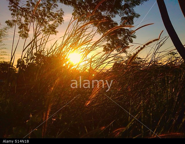 Sunset over the grass [ENbyGT] - My photo's just been accepted by @stockimo & it's now for sale on @alamy #photography #excited