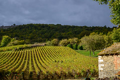 Bourgogne St-Romain 161009 1421 - Photo of Lusigny-sur-Ouche