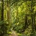 Dandenong Ranges National Park by phunnyfotos