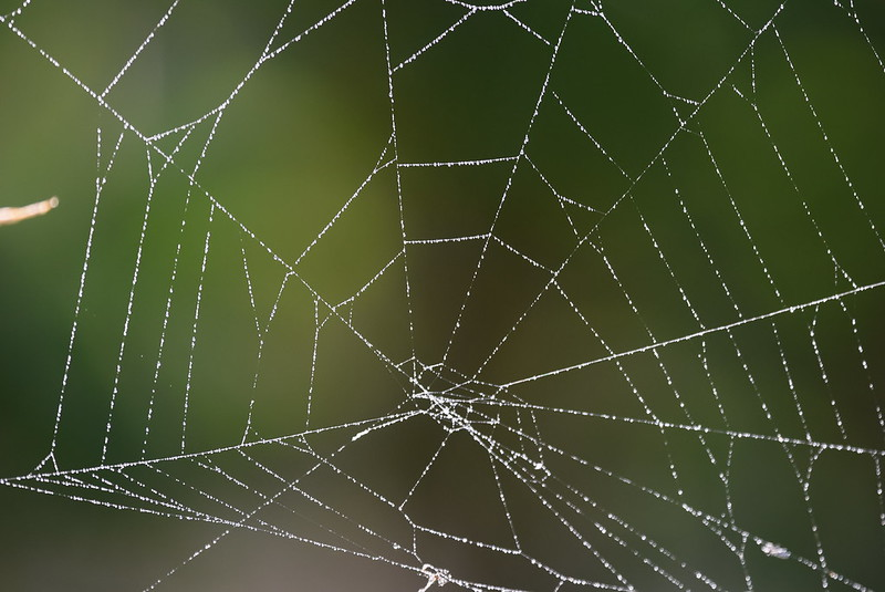 Web 15.10 (10)