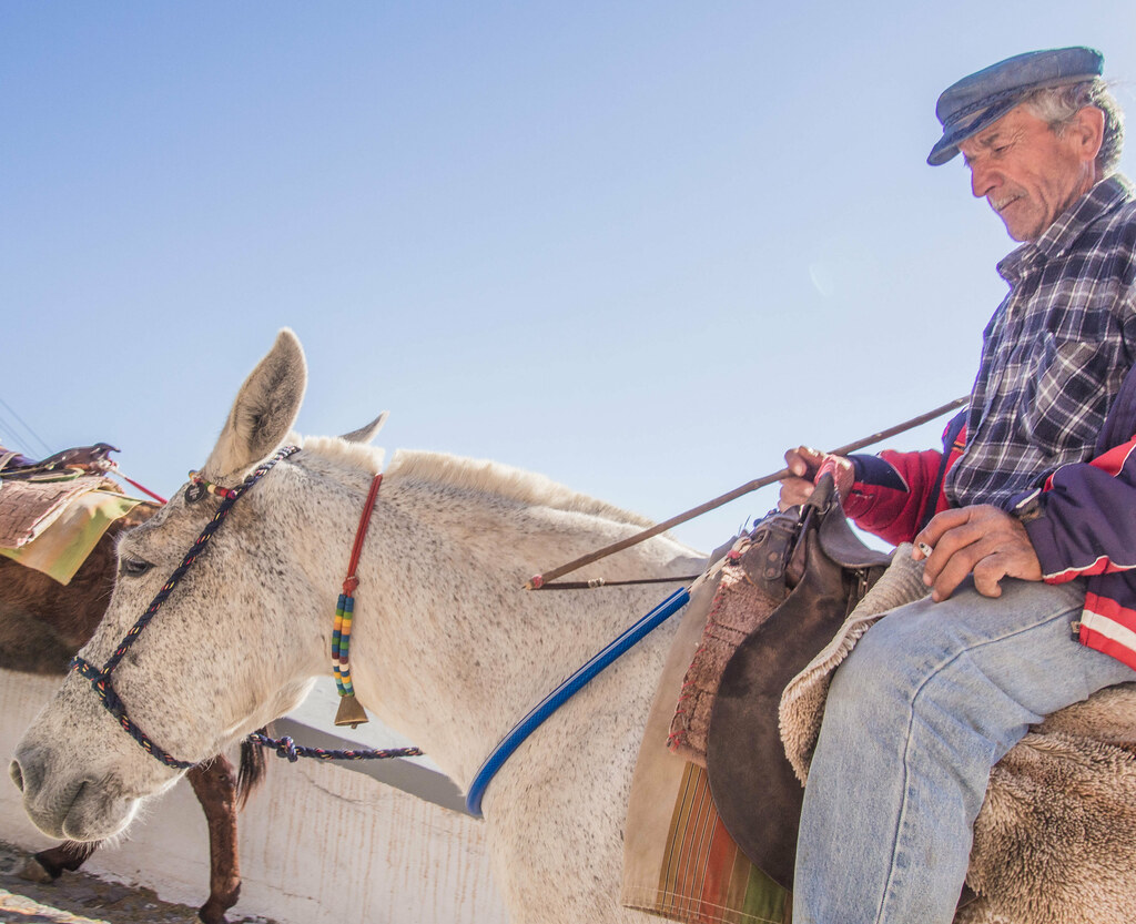 Donkey rider at Fira