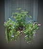 Charleston Window Box