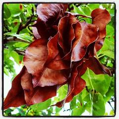 Dried leaves, fresh leaves.