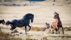 West Desert 13 Oct 2016