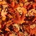 Leaves by historygradguy (jobhunting)