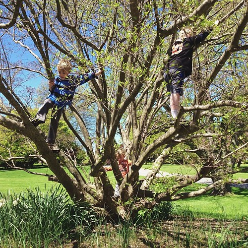 """Recess""...all three climbing the tree"