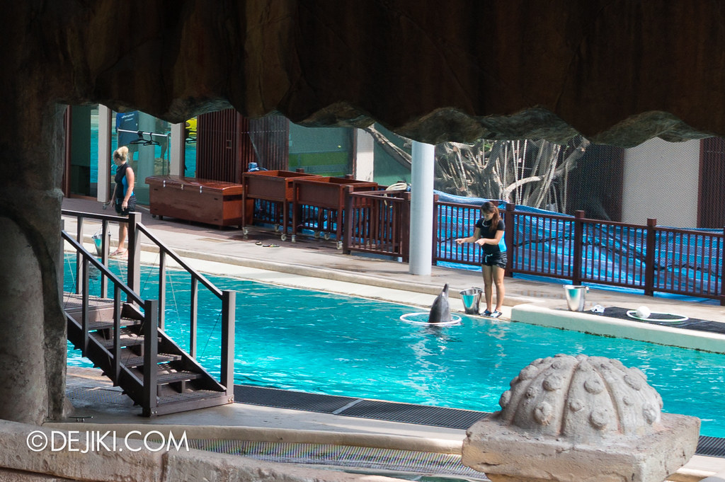 Marine Life Park Singapore - Adventure Cove Waterpark - Dolphins and trainers 3
