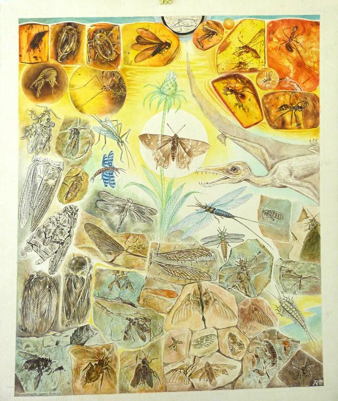 А.Разбойников Палеоинсектарий (Бабочке 40 млн лет)