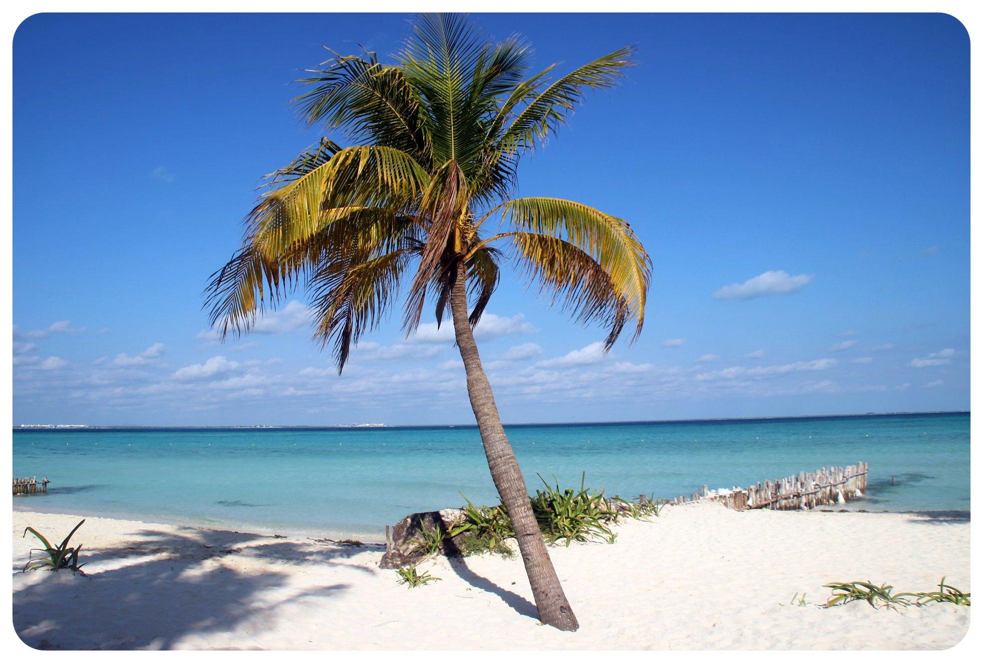 isla mujeres palm tree