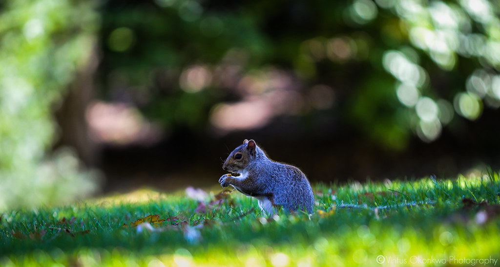 Squirrels of Tufts
